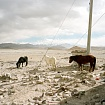 'Three Donkeys In New Dingri' - Tibet
