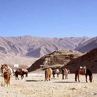Basketball Nets and Horses' - Tibet