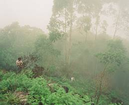 'Tea Picking in Munnar' - India